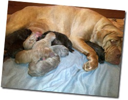 Sienna-and-pups