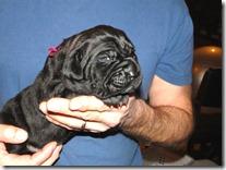 black-Neo-pup