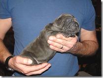 blue-Neo-pup