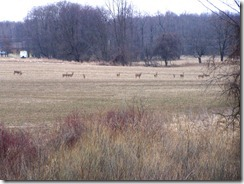deer-meeting