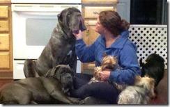 dog-whisperer