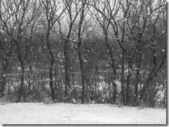 snow-backyard