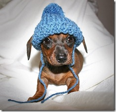 tiny dog hat