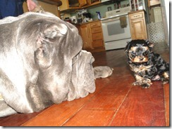 Zeus-and-Yogi-Bear