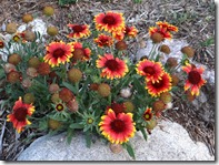 flowers-2012