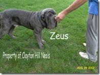 zeus-treat