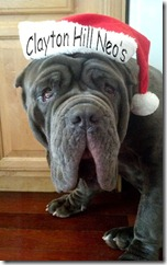 Christmas-Zeus