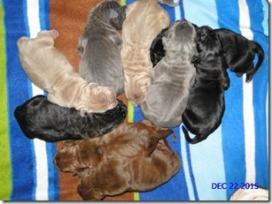 Neo pups 12-15
