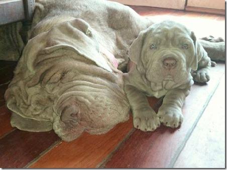 Rollo&Mom