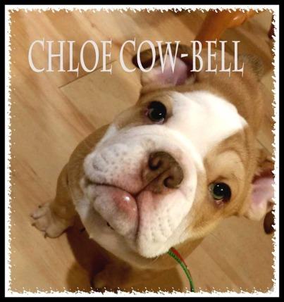 chloe-cow-bell.jpg
