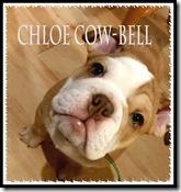 chloe-cow-bell