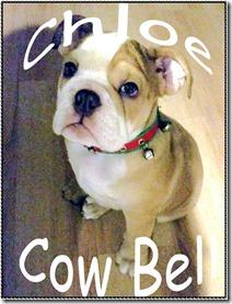chloe-cowbell
