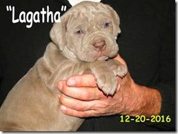 Lagatha-5wks