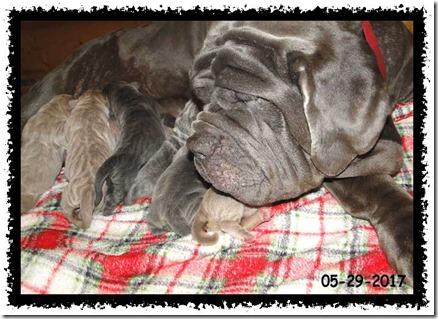 tubby-n-pups