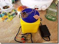 electrolytic-setup