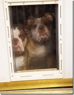 doggy-door