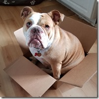 chloe-in-a-box