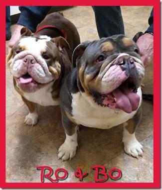 Ro-&-Bo