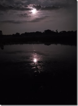 purdypond moonlight
