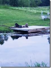 new-deck-dock