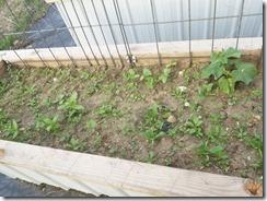 cucumber-zinnia-spinach