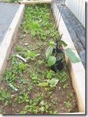 eggplants-pepper-parsley