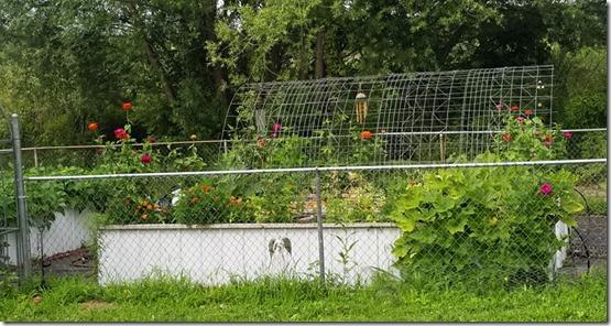 garden-july-2020